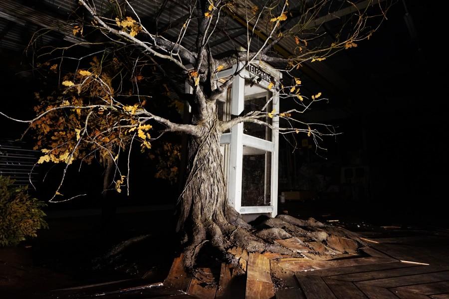 arbre02