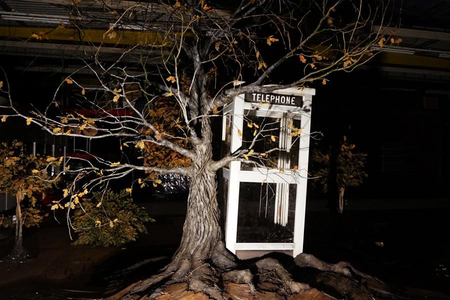arbre03web
