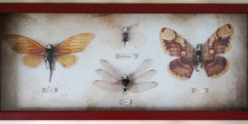 cadre quatre papillons